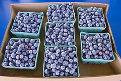 Blueberry Picking (brucetopher) Tags: blueberry blueberries purple farm fresh fruit outdoor blue berry berries pickyourown pick harvest ripe ripen ripened