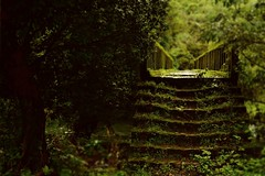 Stairs to secret garden (bishakha.chakraborty) Tags: garden stairs tree green foliage bridge nature streetphotography greenery forest