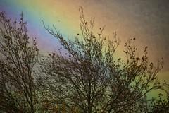 Autumn Rainbow Turangi New Zealand (eriagn) Tags: newzealand turangi autumn rainbow vivid weather leaves rain sunshine cloud stormy nature atmosphere ngairehart eriagn photography seasonal season little stories picswithsoul exploreunexplored