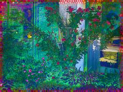 Pensativa. 28292922934_6312dee775_o (seguicollar) Tags: virginiaseguí jardín mujer pensativa woman plantas vegetales cristaleras flores flower imagencreativa photomanipulación arte artedigital artecreativo