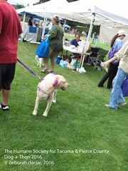DAT2016_Crowd_Scarlet_1128 (greytoes_99) Tags: agility dat2015 dat2016 event humanesocietytacoma people summer tacoma tacomahs volunteers dog humananimalbond cat lakewood wa us