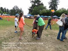 DAT2016_Crowd_1075 (greytoes_99) Tags: agility cat dat2015 dat2016 event humanesocietytacoma people summer tacoma tacomahs volunteers dog humananimalbond lakewood wa us