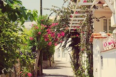 Capri by the old monastery (warner_pics) Tags: capri island sorrento italy paradise flowers trip ilce5100 kitlens sony