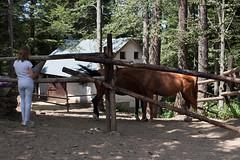 5D_IMG_6609 (Jeroen Kransen) Tags: bulgarije bulgaria    horse horseback equestrian horseriding paardrijden paardrit rodopen rhodopes
