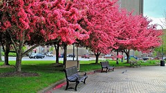 Sitting quietly, doing nothing, spring comes, and the grass grows by itself (chowdhuryfarah) Tags: pink spring grass curve outdoors