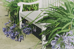 Happy Botanical Bench Monday! (suzanne~) Tags: bench outdoor plant flower munich agapanthus