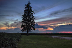 Contemplating the Blue Hour (SteveFrazierPhotography.com) Tags: mcdonoughcounty illinois il tree pine soybean field beans sunset beautiful country countryside rural agriculture landscape scene scenery stevefrazierphotography summer august bluehour twilight
