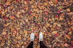Falling for Fall (emgray19) Tags: autumn colors converse portrait landscape pei fallcolors fall lululemon leaves