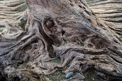 Red Cedar, Blue Stone (David Badke) Tags: metchosin bc beach driftwood
