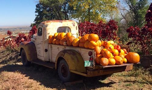 Photo - Joseph V Cassarino- To the Pumpkin Patch
