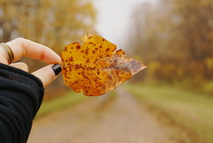 Leafy (obsequies) Tags: fall autumn harvest october leaves leaf color colours country life rural manitoba canada changing change whimsy whimsical chic bokeh orange yellow love travel explore adventure magic colourful seasons seasonal macro