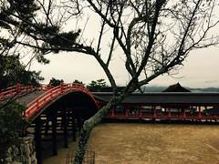 (uucoco) Tags: miyajima itsukushima shrine red bridge japan hiroshima