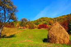 tündöklő ősz / brilliant autumn (debreczeniemoke) Tags: ősz autumn táj land tájkép landscape színes színpompás colorful október october fa tree bokor bush szénaboglya haystack olympusem5