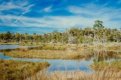 Boardman Pond (corran105) Tags: bulowcreek bulowplantationruins ormondbeachloop palmcoast ormondbeach boardmanpond color retro vintage vsco vscofilm water pond lake landscape scenic hiking trail