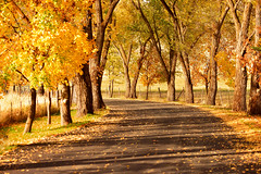 Grace (Karen McQuilkin) Tags: grace huntsvillemonastery enterance trees fall utah karenmcquilkin curving road abbey sacred monks changinghands