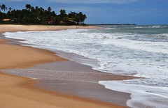 a TROPICAL country (Ruby Ferreira ) Tags: trees brazil sand waves coconuts atlanticocean oceanoatlntico salvadorba northeasternbrazil praiaocenica brasilemimagens