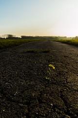 litle Flower (Tobi Sp) Tags: road street broken way off cracks cracked weg risse gebrochen strase aufgeplatzt