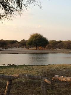 Botswana Hunting Safari 18