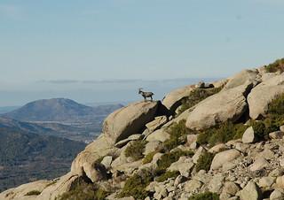 Spain Ibex Hunt & Driven Partridge Hunts 49