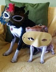Ivan and Hazel in disguise (EllenJo) Tags: silly dogs bostonterrier ivan masks hazel digitalimage motox 2015 chihuahuamix thriftstorescore march7 chiweenie indisguise mardigrasmask motorolax ellenjo ellenjoroberts march2015