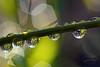 Winter light (MaiGoede) Tags: macro canon flora waterdrops makro wassertropfen winterstimmung greatphotographers fedderwardersiel awinterday flickraward flickraward5