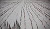 Road trip to see the countryside between Harbin and Vladivostok 1/48 (johey24) Tags: china harbin countryroads northeastchina chinaoffthebeatentrack chinesesiberia villagelifeinchina harbincountryside harbintovladivostok