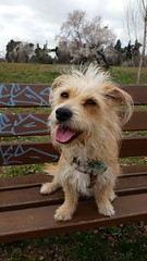 La meva petita (miriammorenoperez) Tags: dog pets can perro mejoramigo
