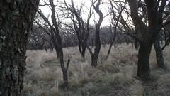 Entre árboles (Photographys Cindi) Tags: árboles campo soledad frío