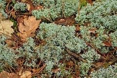 Mech-DSC_5330 (Marek7) Tags: nature forest nationalpark moss kampinos