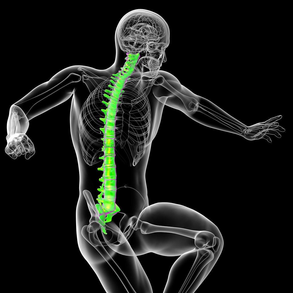 The World\'s Best Photos of anatomy and vertebra - Flickr Hive Mind