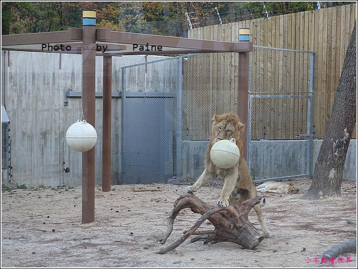 釜山動物園 (61).JPG