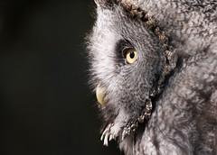 Eule (lucyb_22) Tags: berlin bird animal zoo owl berlinzoo