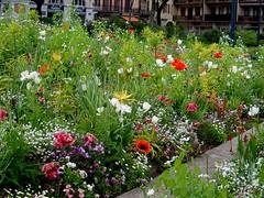 Annecy, European Gardens (wattallan594) Tags: travel france annecy gardens europe european central