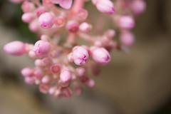 Greenhouse flowers (Kashinkoji) Tags: flower osaka slt a77  turumiryokuti