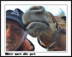 Pret met die Pet (gill4kleuren - 12 ml views) Tags: horse pet me sarah fun gill saar paard haflinger