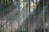 Beams (ralf.kerkhoff) Tags: natur bäume botanik reken bahnhofreken wildparkfrankenhof