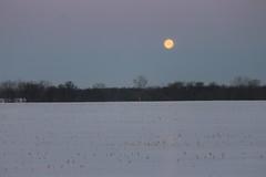 Full Moon in the Morning - Saline, Michigan - March 6, 2015 (cseeman) Tags: morning winter moon snow circle michigan fullmoon fields farms saline winterfields