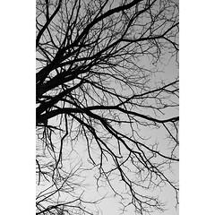 Un reflejo de lo que es, raíces que crecen intentado alcanzar el cielo. (gomez_josemanuel) Tags: blackandwhite blancoynegro blanco contraluz nikon negro cielo techo arriba dificil imposible crecer nikond3300