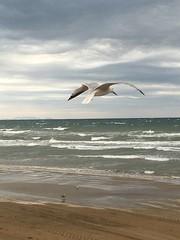 IMG_7542 (FranFerrandis) Tags: shotoniphone6s sky clouds cloud cloudysky bluesky bird birds seagulls seagull gaviotas volando flying sea seafront water valencia spain