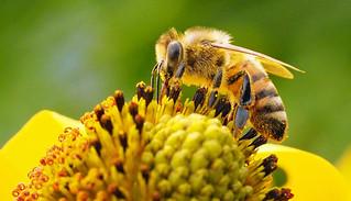 bee content
