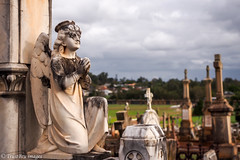 Eternally praying carved Angel, facing west and kneeling in perpetuity (gbguri) Tags: grave angel praying
