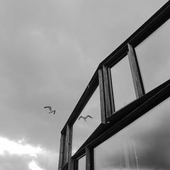(cm.andersson) Tags: bird reflection black white blackandwhite monchrome window windows tg tg3 olympus