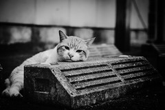 Lazy afternoon (RU333333chang) Tags: d5300 bw alleycat cat straycat monochrome  blackandwhite