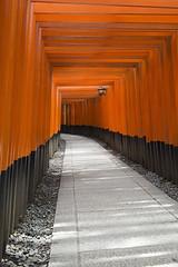 Portal (Igor Voller) Tags: kyoto inari torii gate shrine shinto red orange black path lantern light lightshadow sunlight shadow япония ворота тории синто туннель свет светильник тень светотень красный алый черный дорога 日本 とりい 京都 赤 黒