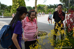 Walk With The Elderly @ Gardens By The Bay (Blossom World Society) Tags: gardensbythebay singapore elderly volunteers volunteering volunteerism service blossomworld blossomworldsg blosomworld walkwiththeelderly walk with gardens by bay
