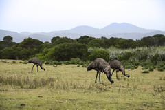 WILSONS PROMONTORY   australia (Focus Unknown) Tags: 2013 australia downunder oceania roadtrip victoria wilsonspromontory documentary journalism capture photography travel trip vacation camera canon people friends geotagged germany iphone square girl holiday home color architecture sunset beach water sky flower red blue nature night tree white green flowers portrait art snow light dog sun clouds cat winter park street landscape summer trees sea city yellow christmas lake family bridge bird river pink house car food bw old macro new music