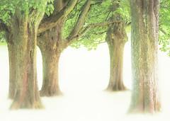 treenessness (Hal Halli) Tags: trees park nature ethereal peace wallart exoticimage crazygeniuses netartii