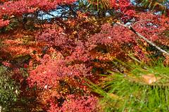 Narita-san red (malinowy) Tags: winter japan 35mm temple nikon buddhist nippon nikkor zima narita naritasan honshu shingon japonia swiatynia malinowy d7000 shinshōji malinowynet