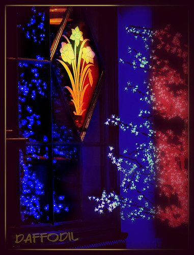 christmaslights daffodil cheltenham clanflickr ipiccy