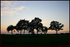 A shape of trees (shumpei_sano_exp6) Tags: sunset sky tree nature landscape evening group shape aplusphoto platinumheartaward betterthangood